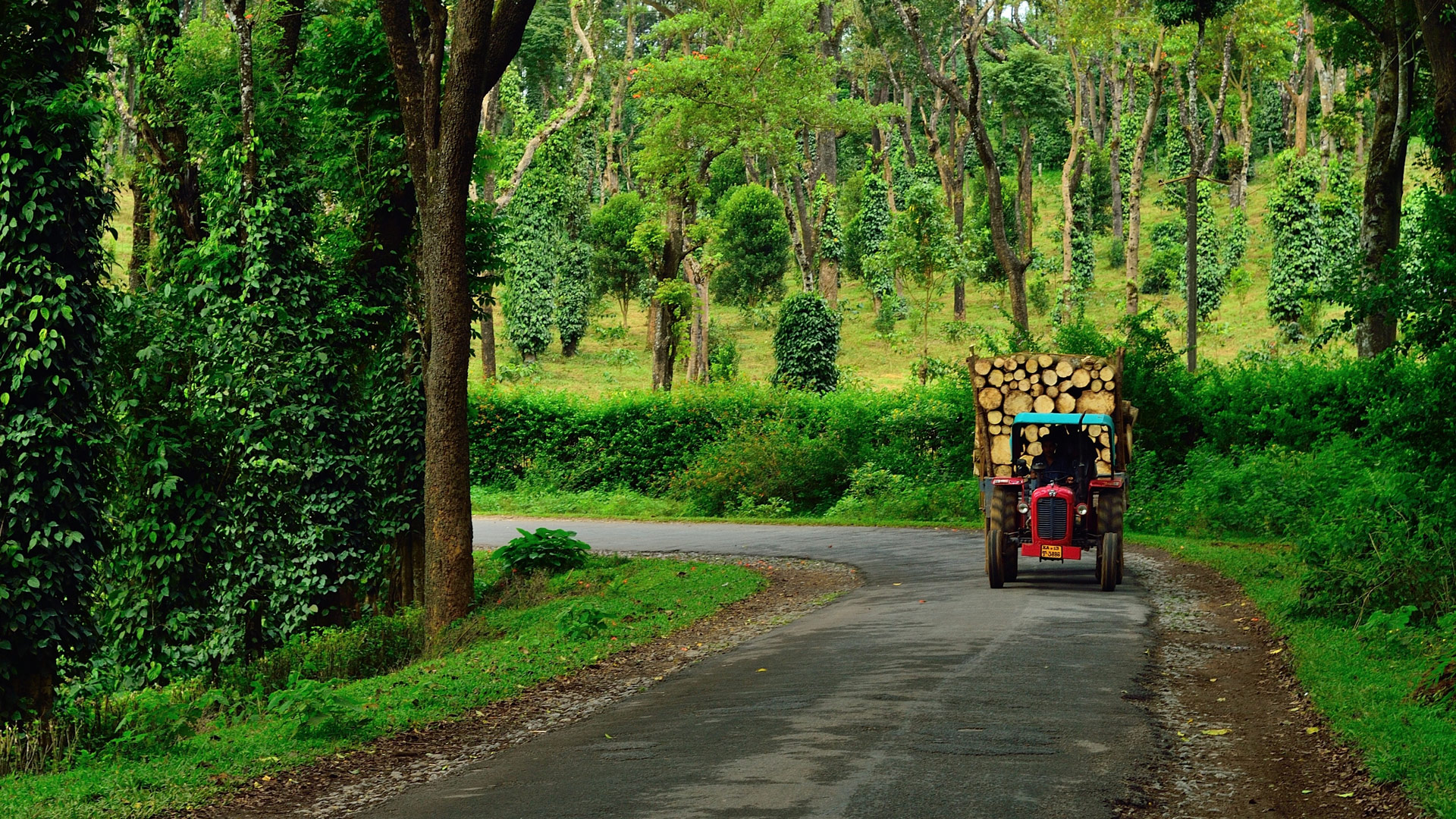 Coorg, Karnataka - Things To Do - Places to Visit - Stays & Budget