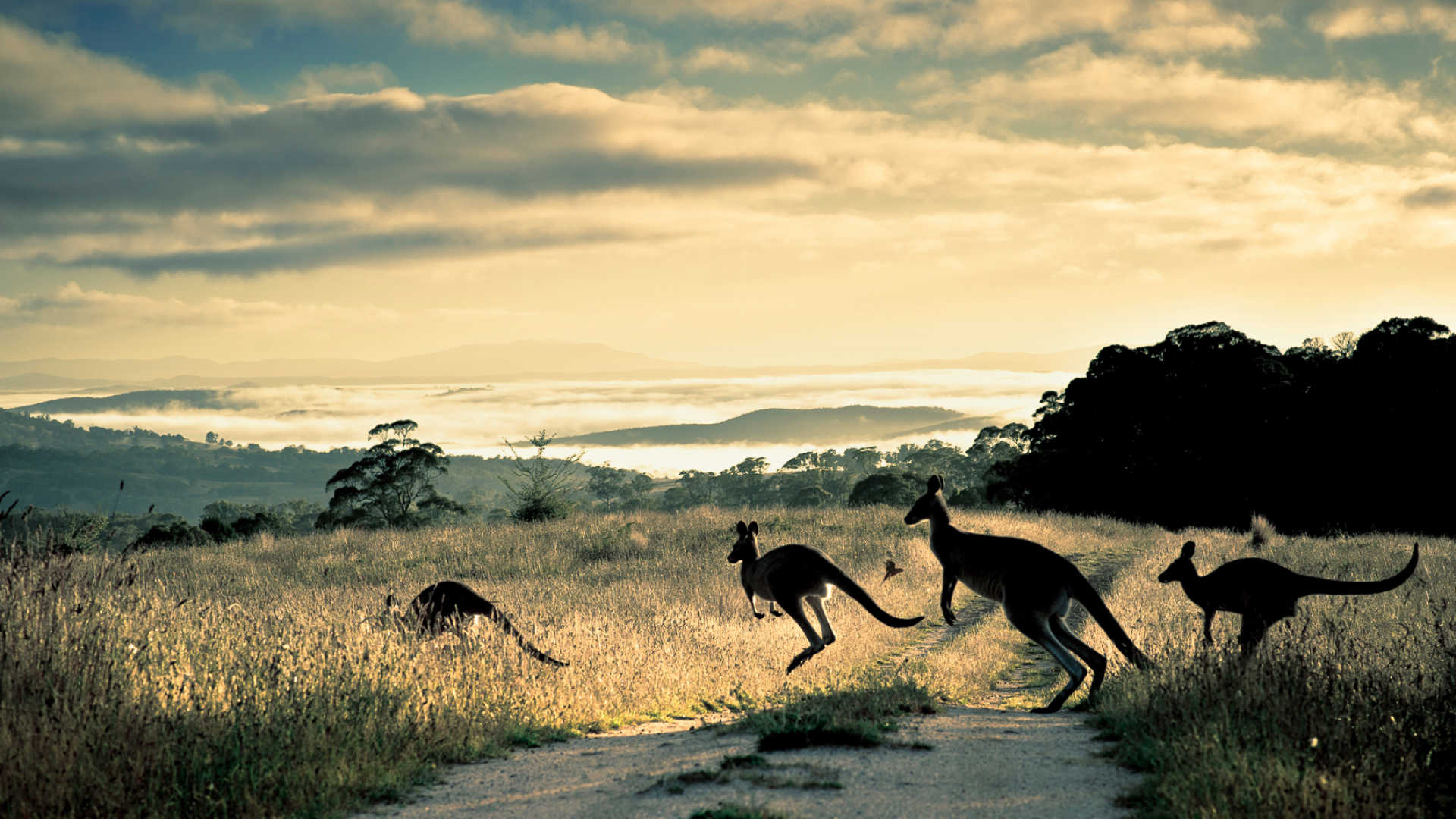 What Makes Australia the Perfect Place for Wildlife Holidays